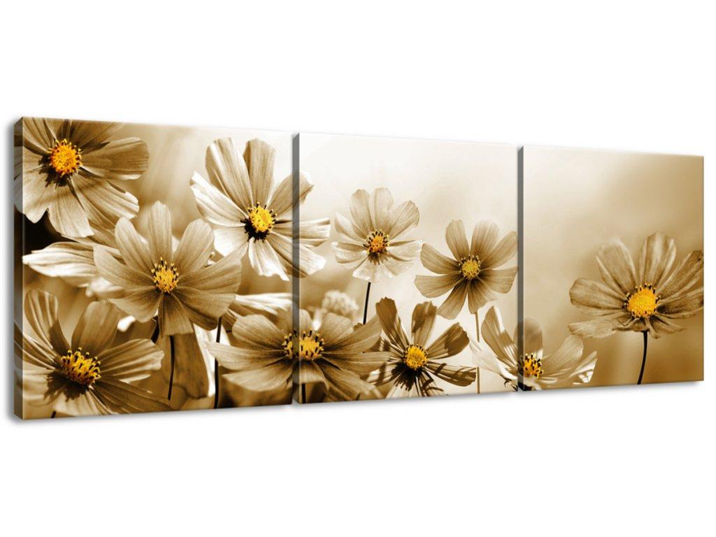 Obraz na plátne Kvetnatá krása  Tlačený v HD