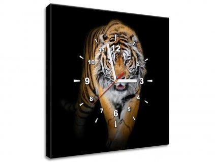 Obraz s hodinami Silný tiger  + Darček