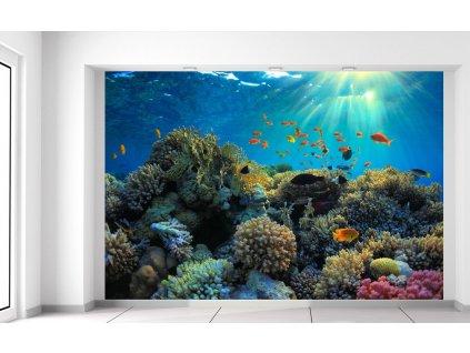 Fototapeta Krásny korálový útes 200x135cm  + Darček
