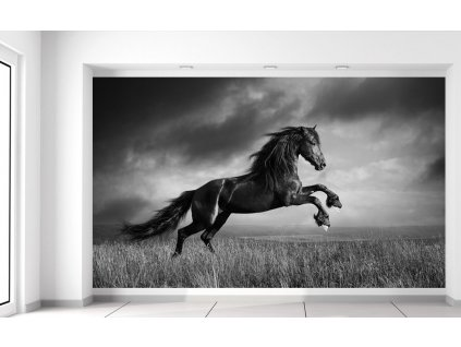 Fototapeta Tajomný čierny kôň  + Darček