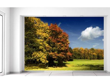 Fototapeta Park v jeseni 200x135cm  + Darček