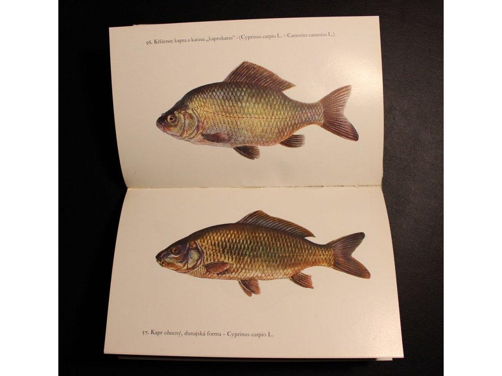 Kniha Ryby Dr. Otakar Štěpánek x168 15