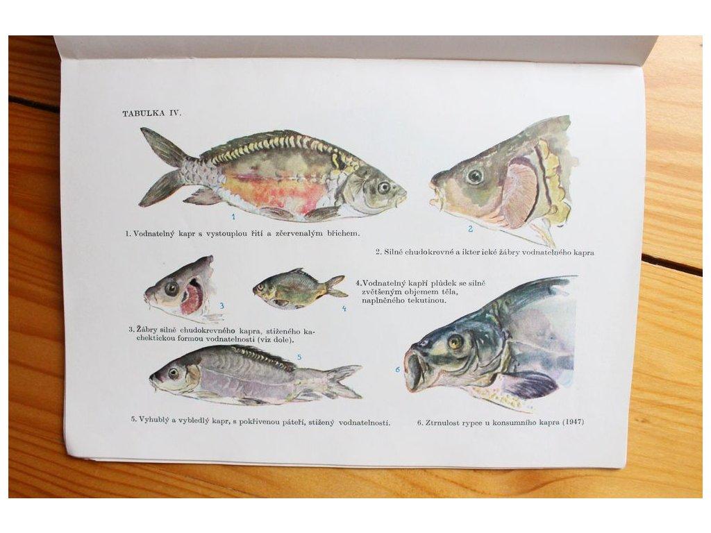 Nemoci našich ryb Václav Dyk x193 14