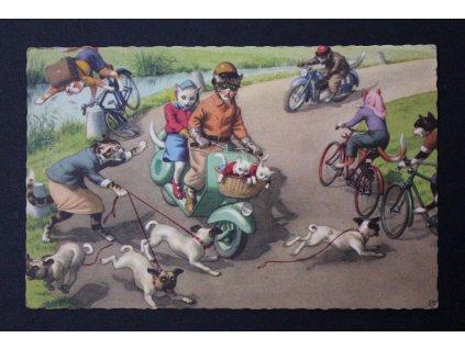 Stará pohlednice kočičí rodinka kočka Belgium P204 (1)