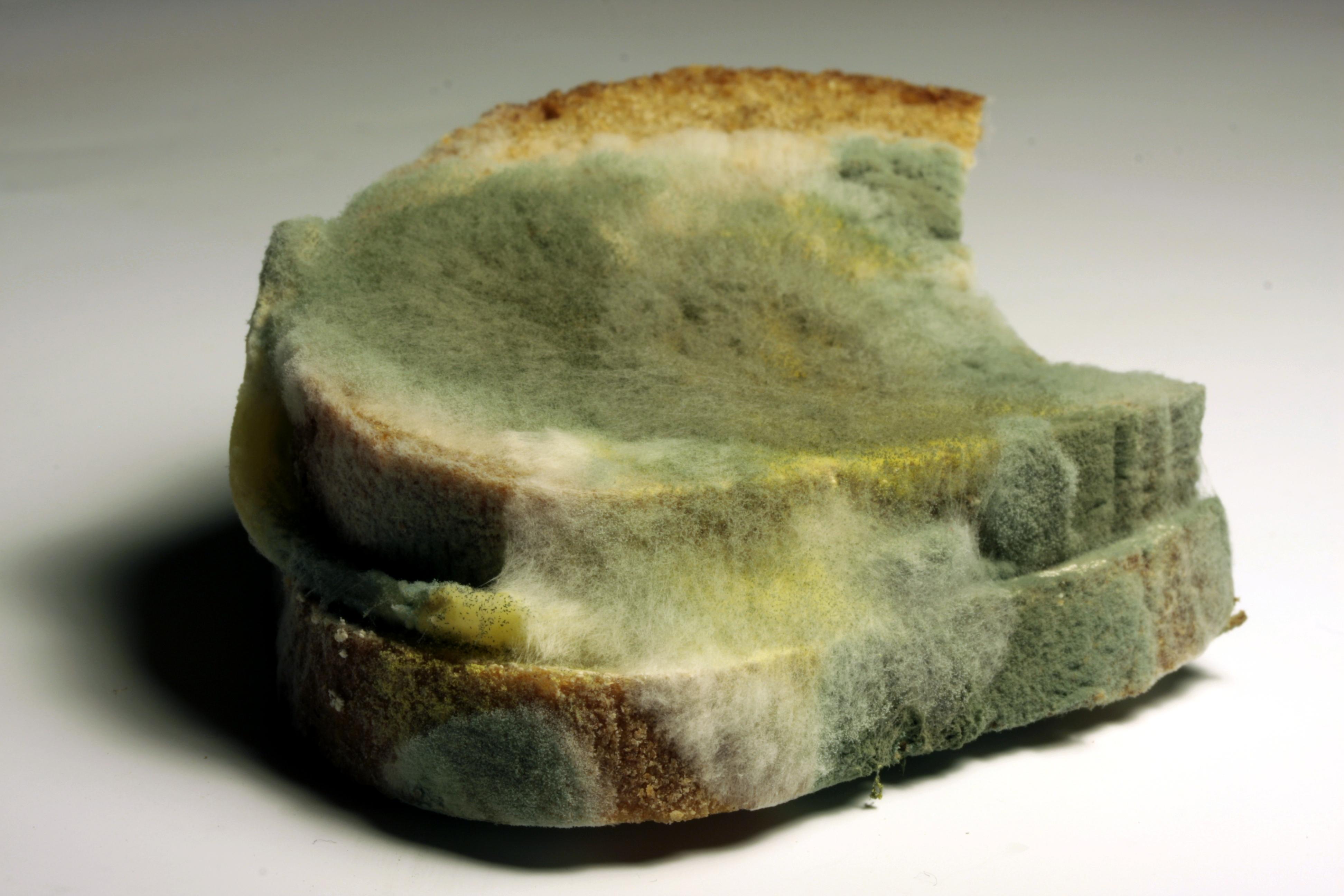 Plíseň na chlebu