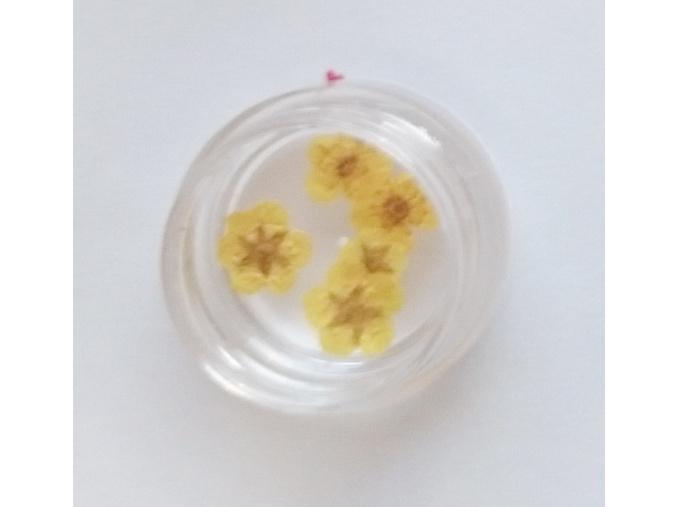 susene kvety 7