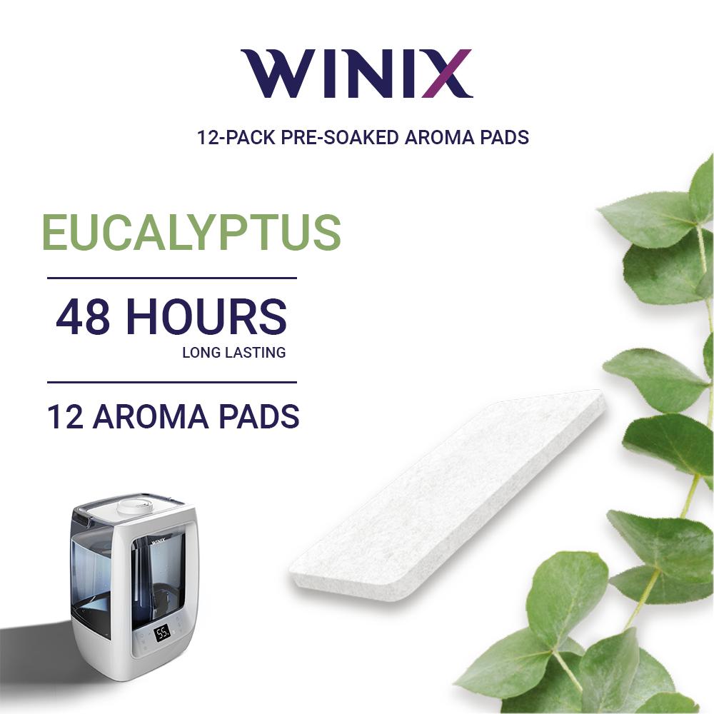 eucaliptus_1