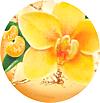 fabuloso_mandarine_e_vaniglia_profume