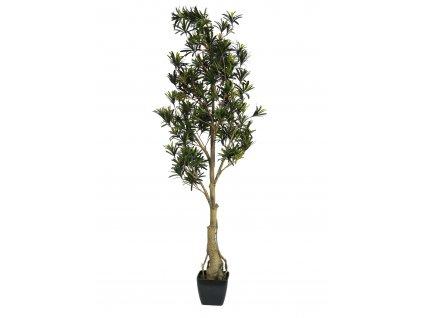 Nohoplod stromek, 150 cm