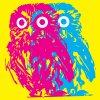 Fewer Owls Cinderslut