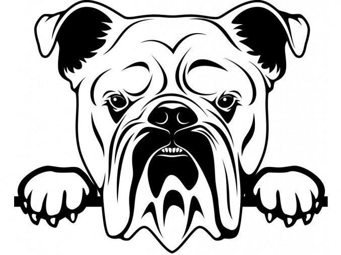 Samolepka pes Anglický buldog