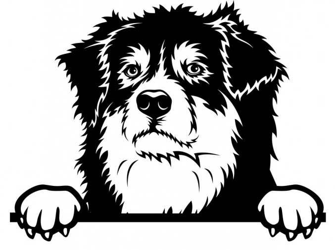 Samolepka pes Australský ovčák