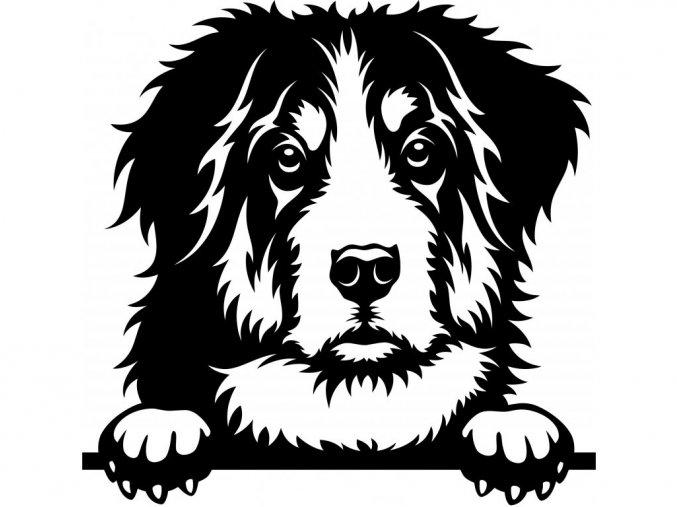 Samolepka pes Bernský salašnický pes
