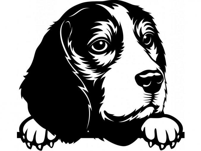 Samolepka pes - Bígl