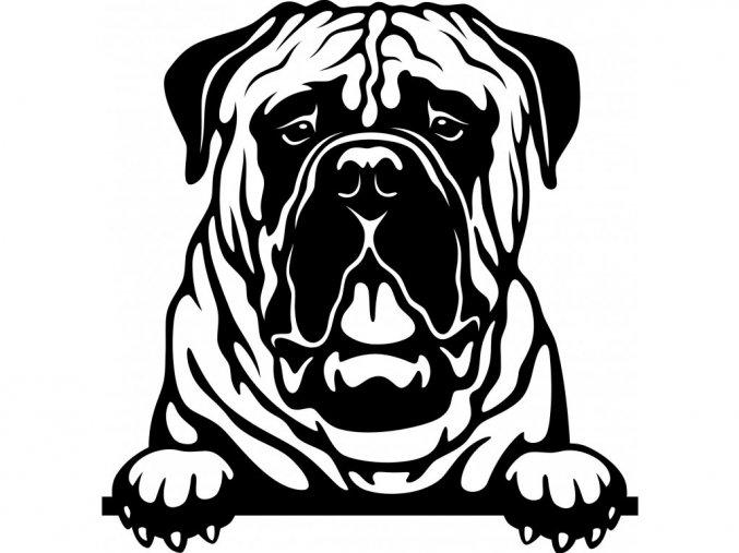 Samolepka pes Bullmastif