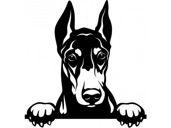 Samolepka pes - Dobrman