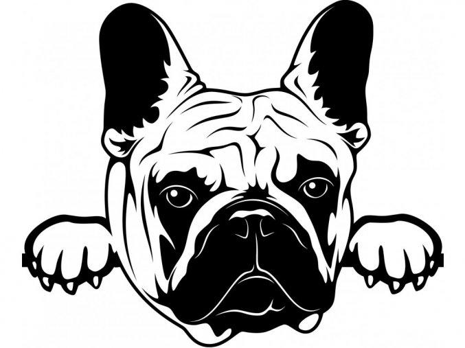 Samolepka pes Francouzský buldoček