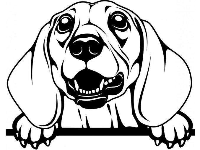 Samolepka pes Jezevčík