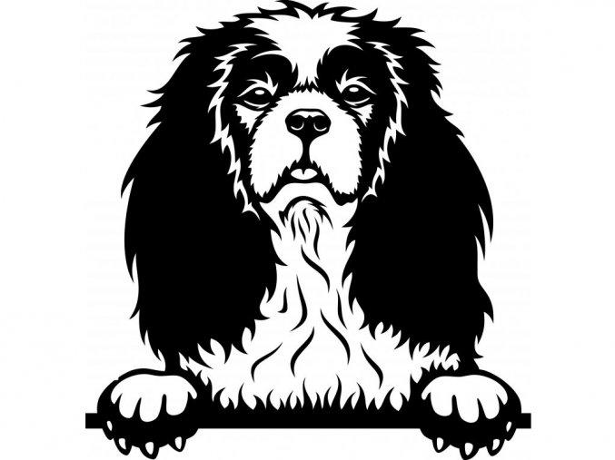 Samolepka pes Kavalír King Charles Španěl