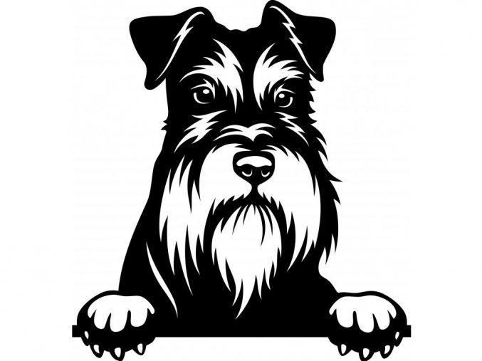 Samolepka pes Knírač malý