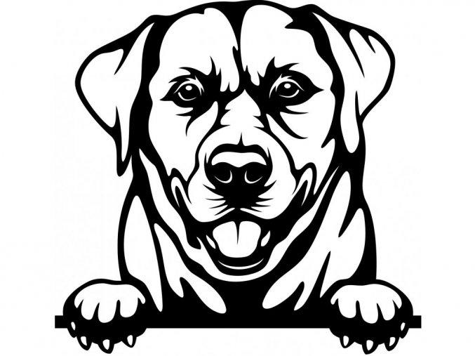 Samolepka pes Labrador jazyk