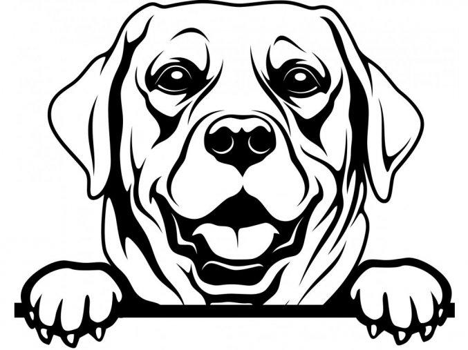 Samolepka pes Labrador retrívr