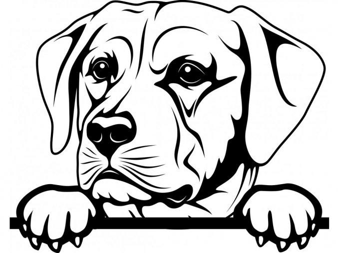 Samolepka pes Labrador