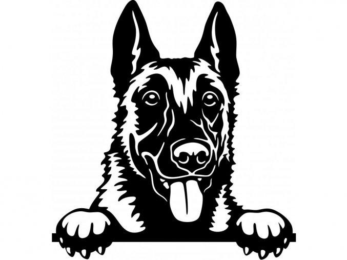 Samolepka pes Belgický ovčák