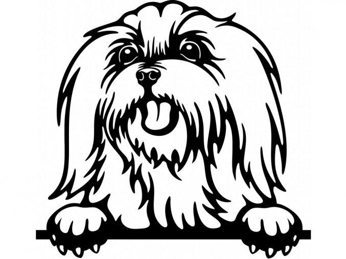 Samolepka pes Maltéz jazyk