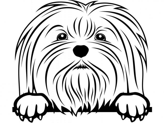 Samolepka pes Maltézský psík