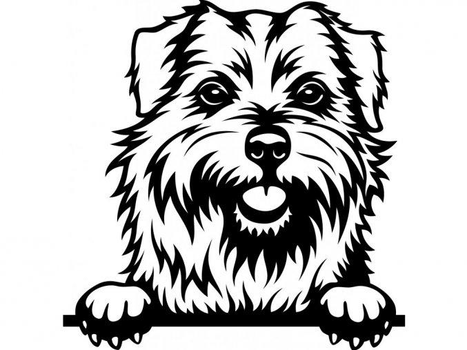 Samolepka pes Norfolský teriér