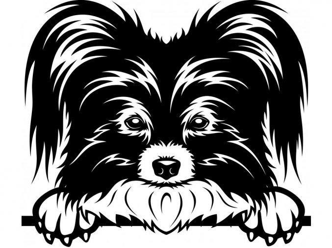 Samolepka pes - Papilon