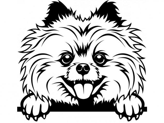 Samolepka pes - Pomeranian