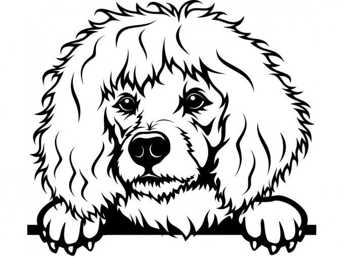 Samolepka pes Pudl