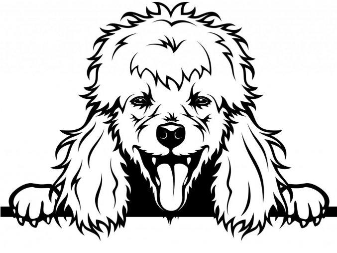 Samolepka pes Pudl s vyplazeným jazykem