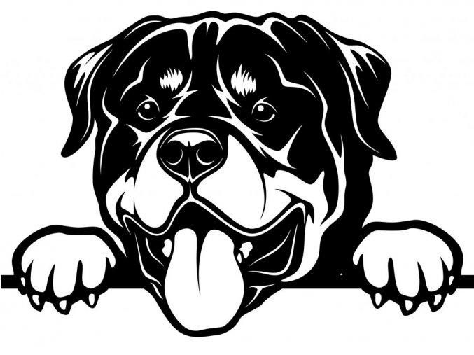 Samolepka pes Rotvajler vyplazený jazyk
