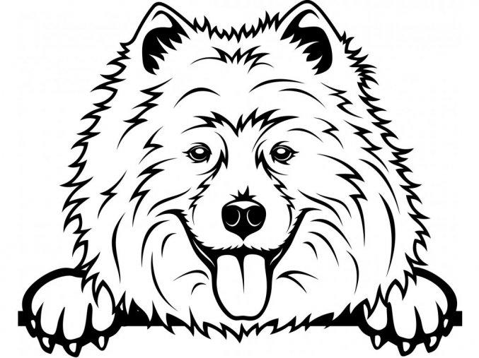 Samolepka pes Samojed