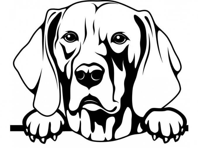 Samolepka pes Výmarský ohař