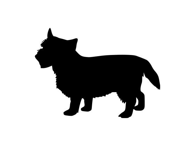 Samolepka pes - Norwich teriér