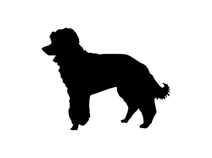 Samolepka pes - Trpasličí pudl