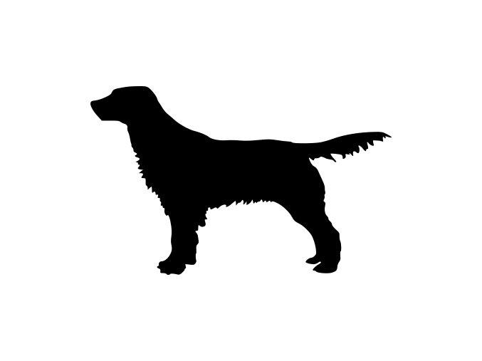 Samolepka pes - Anglický špringršpaněl