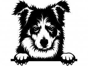 Samolepka pes Border kolie