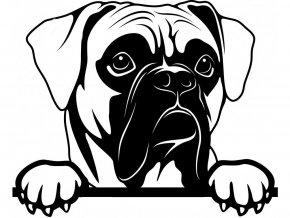Samolepka pes - Boxer