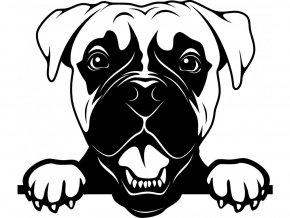 Samolepka pes Boxer s vyplazeným jazykem