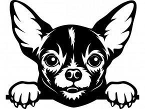 Samolepka pes - Čivava černá