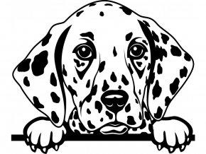 Samolepka pes Dalmatin