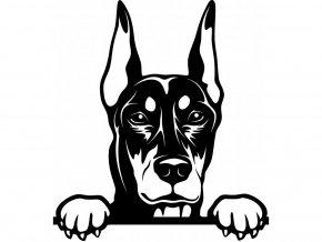 Samolepka pes - Dobrman 2