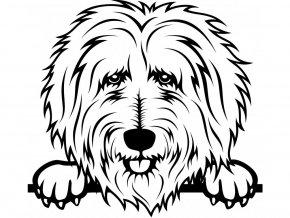 Samolepka pes Goldendoodle