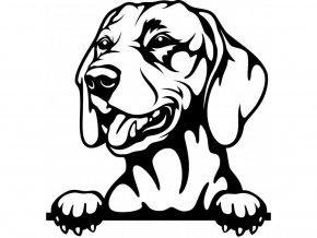Samolepka pes Maďarský ohař krátkosrstý