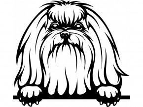 Samolepka pes Maltéz